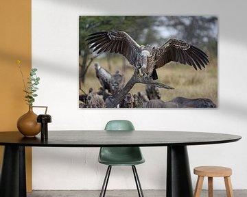 Op safari in Afrika: Afrikaanse Vale Gier (Serengeti, Tanzania) van Koolspix