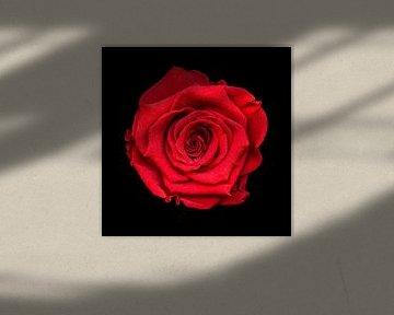 Rode roos van Marian Waanders