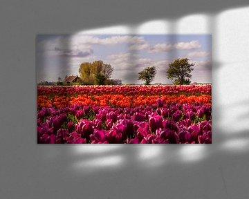 Tulipfield von Marga Vroom