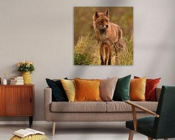 Kleiner Fuchs in den Dünen von Marjolein van Middelkoop