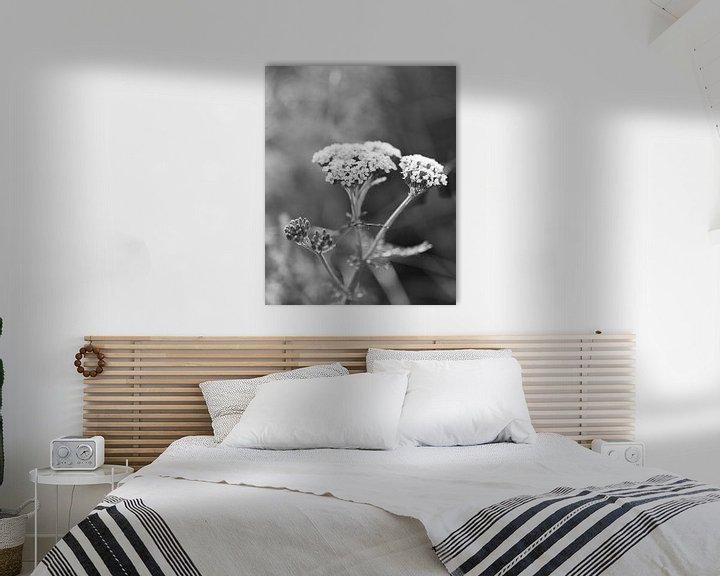 Sfeerimpressie: Duizendblad plant met witte bloemen van Ebelien