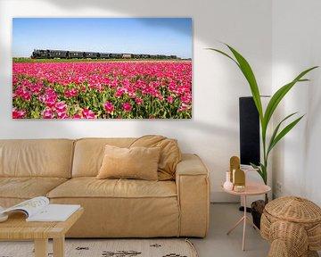 De stoomtram van Hoorn naar Medemblik rijdt langs een tulpenveld van Dennis Dieleman