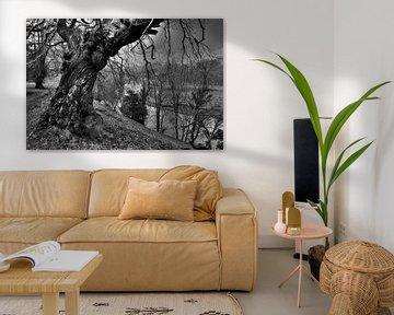 Levens Deer Park, Kendal England, zwart-wit landschapsfoto van Rob Severijnen