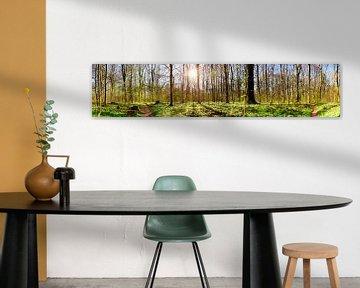 Waldpanorama im Frühling von Günter Albers