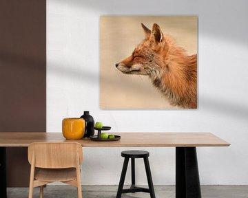 Un petit renard détendu, les yeux fermés sur Marjolein van Middelkoop