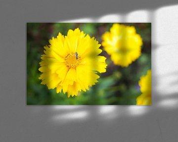 Gelbe Blume mit Insekt von Photos by Aad