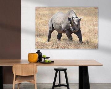 Rhinocéros noir sur Koolspix