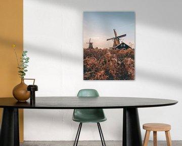 Typische niederländische Windmühlen in Zaanse Schans an einem Sommerabend zur goldenen Stunde