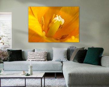 Tulpe im Herzen gesehen von Corrie Ruijer