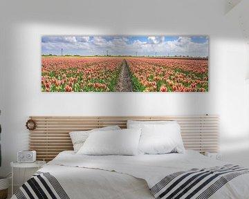 Rote Tulpen in einer niederländischen Landschaft im Frühling von eric van der eijk