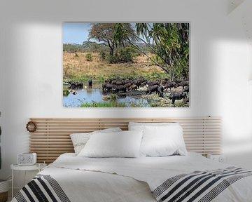 African Wildlife: Kaapse buffels bij waterpoel in de Serengeti (Tanzania) van Koolspix