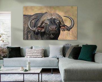 Op safari in Afrika: Kaapse buffel up close and personal (Tanzania) van Koolspix