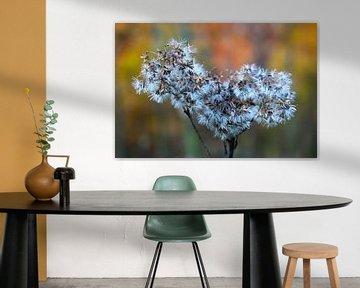 Pflanzenmakro von JASV Photography