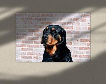 Hondenwereld van Gina Peeters Fotografie
