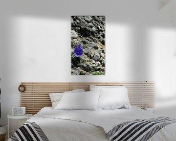 De bloem en de rots van Marinescu Dan