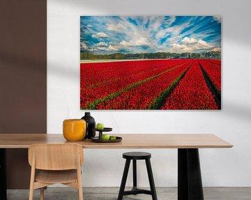 Tulpenvelden in Nederland van Gert Hilbink