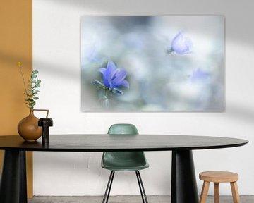 Glockenblume in zartem Blau