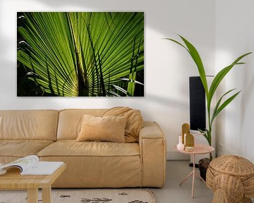 Palmblad in tegenlicht (Florida, USA) van Koolspix