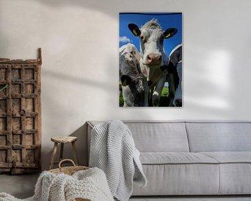 Tag der Kuh von Wolbert Erich