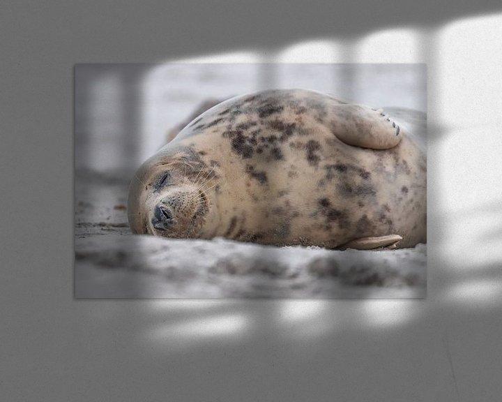 Beispiel: schlafende Robbe am Strand von Desirée Couwenberg