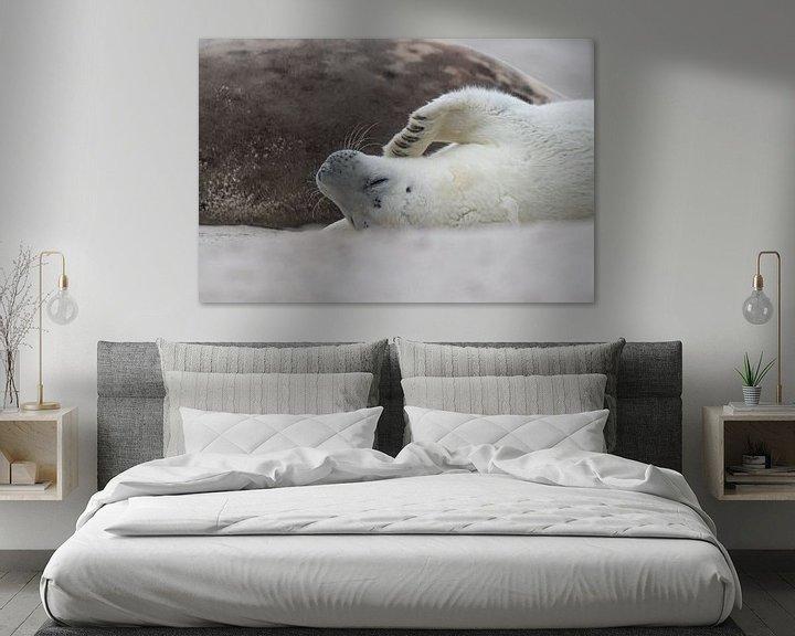 Beispiel: Robbenwelpe lügt Mutter an von Desirée Couwenberg