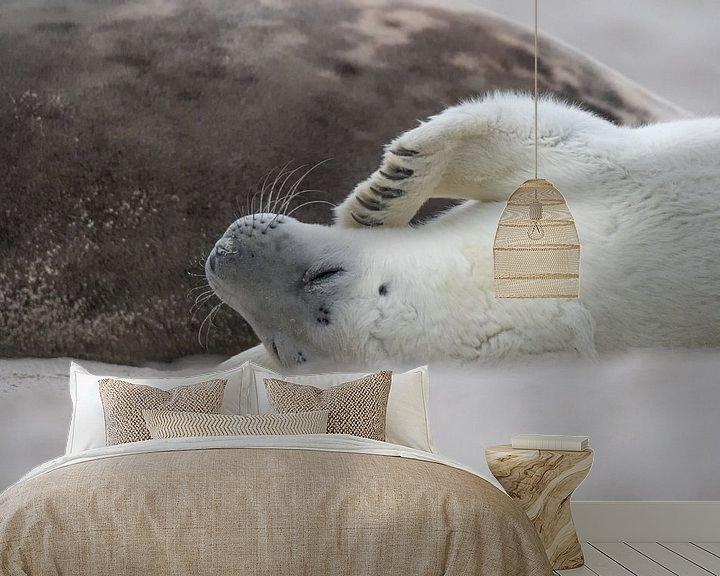 Beispiel fototapete: Robbenwelpe lügt Mutter an von Desirée Couwenberg