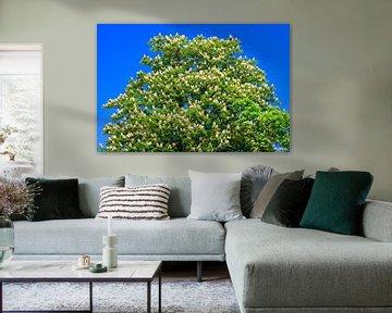 Baumkrone Kastanienbaum von Thomas Jäger