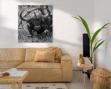 Büffel in der Tshukudu Game Lodge - Südafrika von Lizanne van Spanje
