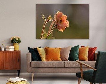 oranje lentebloem in de zon van Tania Perneel