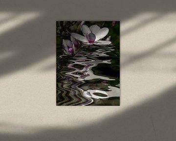 Bloemenwater - magnolia van Christine Nöhmeier