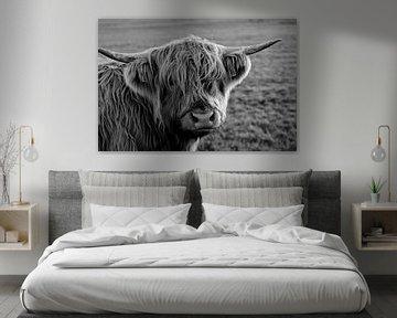 Hooglander koe kijkt indringend; in zwart-wit