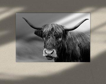 Highlander in Schwarz-Weiß