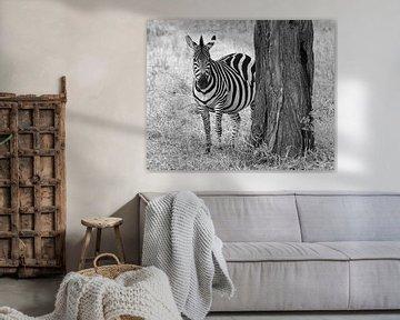 Zebra in schwarz-weiß von Koolspix