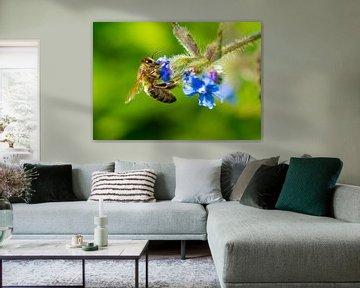 Une abeille sur Jorrit Eijgensteijn