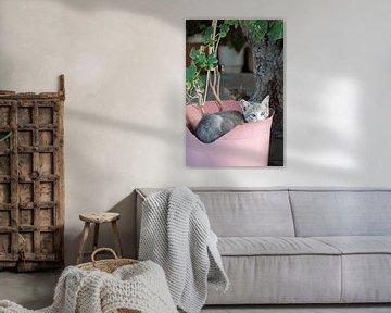 Katze im rosa Blumenkasten von gj heinhuis