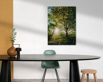 Baum in der Morgenpracht von Merel Tuk