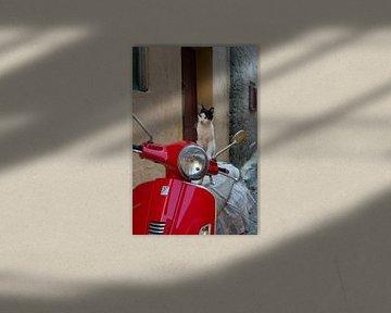 Katze auf rotem Roller von gj heinhuis