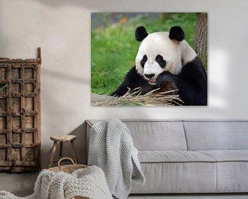 Großer Panda von Koolspix