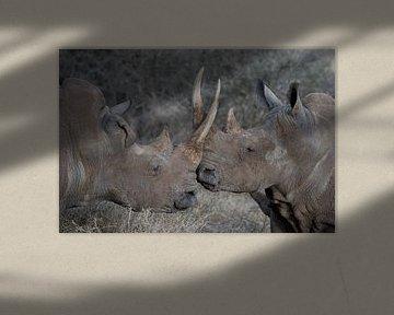zwarte neushoorn van gj heinhuis