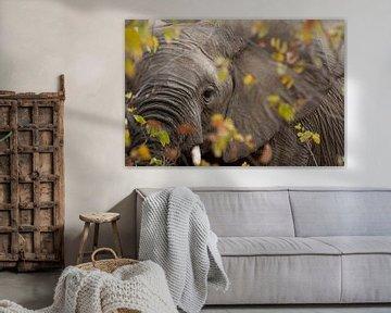 doorkijk olifant van gj heinhuis
