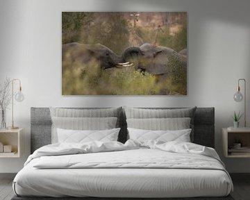Elefanten von gj heinhuis