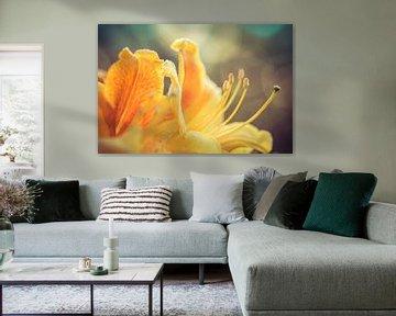 Rhodondendron in bloei van Niels Barto