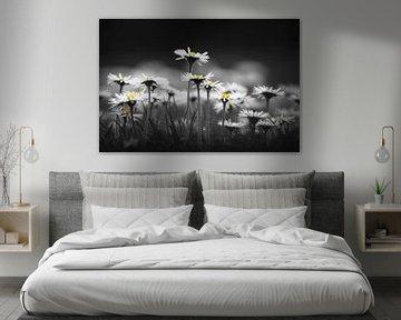 Gänseblümchen von Niels Barto