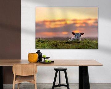 Lammetje Texel van Texel360Fotografie Richard Heerschap