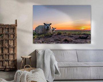 Moeder met lammetje Zonsondergang Texel van Texel360Fotografie Richard Heerschap