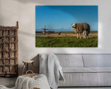 Moeder met lammetje Molen het Noorden Texel van Texel360Fotografie Richard Heerschap