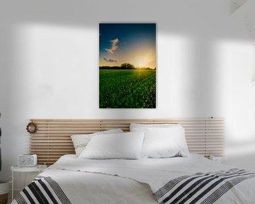 Die Sonne geht hinter einem Rapsfeld unter von Jaimy Leemburg Photography