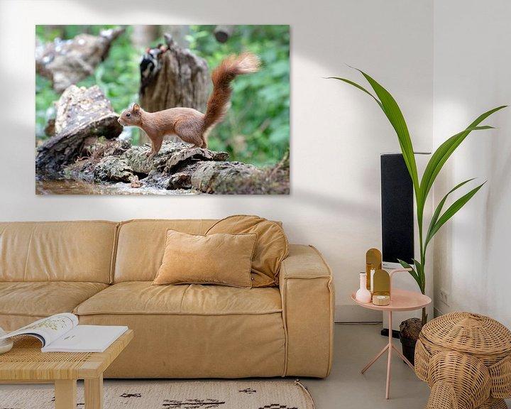 Beispiel: Eichhörnchen von Merijn Loch