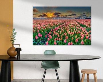 Sonnenuntergang mit orangefarbenen Tulpen in einem Zwiebelfeld im Frühling von eric van der eijk