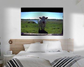 Koe in de Zouweboezem van Merijn Loch